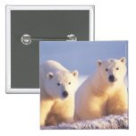 Polar bear sow with cub on pack ice of 1002 15 cm square badge
