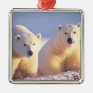 Polar bear sow with cub on pack ice of 1002 Silver-Colored square decoration