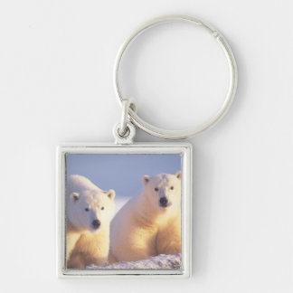Polar bear sow with cub on pack ice of 1002 Silver-Colored square key ring