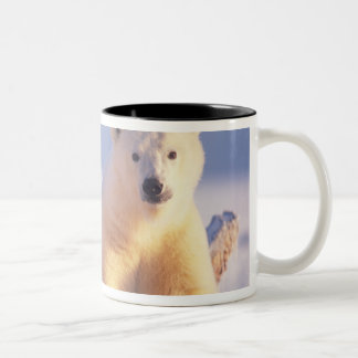 Polar bear sow with cub on pack ice of 1002 Two-Tone coffee mug