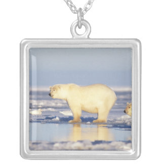 Polar bear sow with cub, pack ice, coastal silver plated necklace