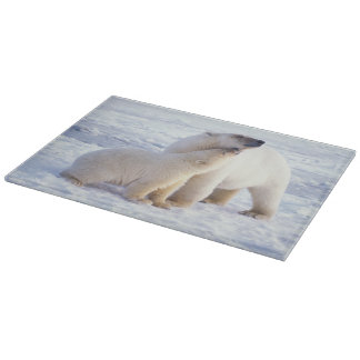 Polar bear sow with cub, pack ice of the cutting board