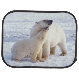 Polar bear sow with cub, pack ice of the floor mat