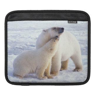 Polar bear sow with cub, pack ice of the iPad sleeve