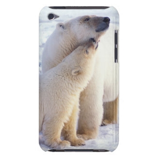 Polar bear sow with cub, pack ice of the iPod touch Case-Mate case