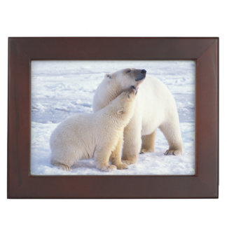 Polar bear sow with cub, pack ice of the keepsake box