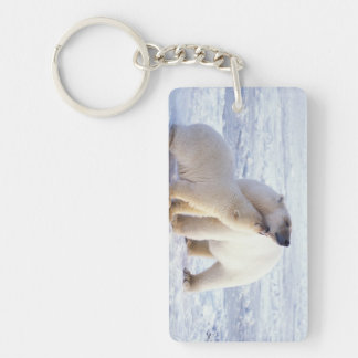Polar bear sow with cub, pack ice of the key ring