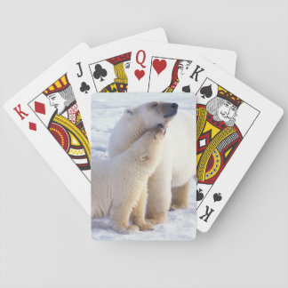 Polar bear sow with cub, pack ice of the playing cards