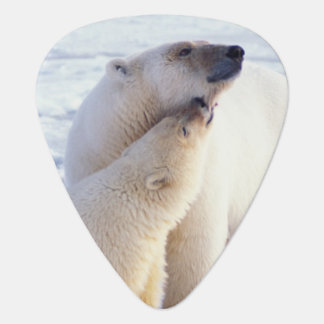 Polar bear sow with cub, pack ice of the plectrum