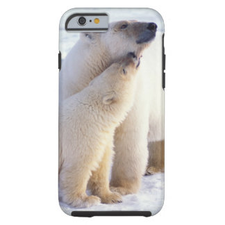 Polar bear sow with cub, pack ice of the tough iPhone 6 case