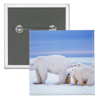Polar bear sow with cubs on pack ice of 15 cm square badge
