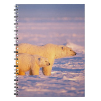 Polar bear sow with spring cubs on the frozen notebooks
