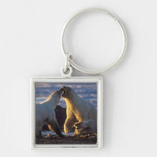 Polar bear sows with cub at side, 1002 coastal key ring