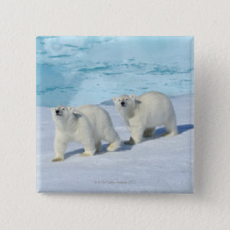 Polar bear, two cups on pack ice, Ursus 15 Cm Square Badge