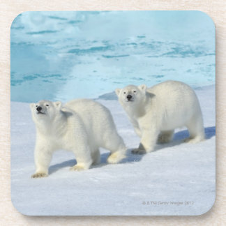 Polar bear, two cups on pack ice, Ursus Coaster