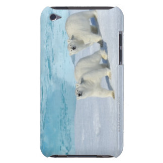 Polar bear, two cups on pack ice, Ursus iPod Touch Cover