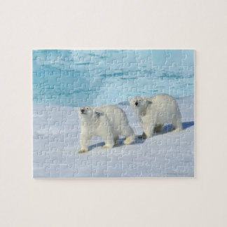 Polar bear, two cups on pack ice, Ursus Jigsaw Puzzle
