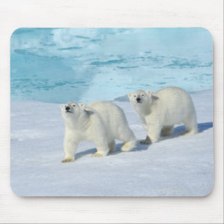 Polar bear, two cups on pack ice, Ursus Mouse Pad
