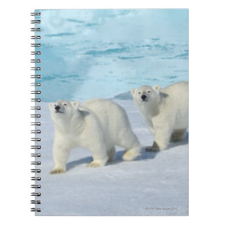 Polar bear, two cups on pack ice, Ursus Notebook