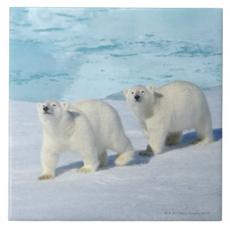 Polar bear, two cups on pack ice, Ursus Tile