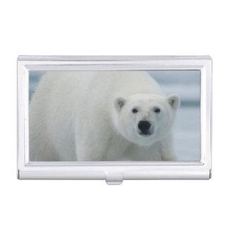 Polar Bear, Ursus Maritimus, Adult Business Card Holder