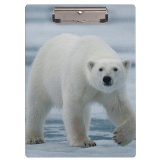 Polar Bear, Ursus Maritimus, Adult Clipboard