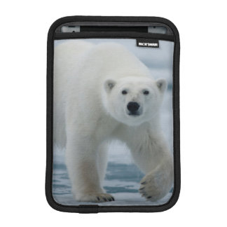 Polar Bear, Ursus Maritimus, Adult iPad Mini Sleeve