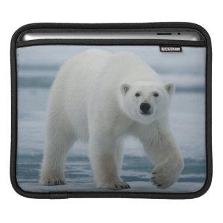 Polar Bear, Ursus Maritimus, Adult iPad Sleeve