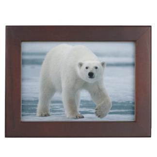 Polar Bear, Ursus Maritimus, Adult Keepsake Box