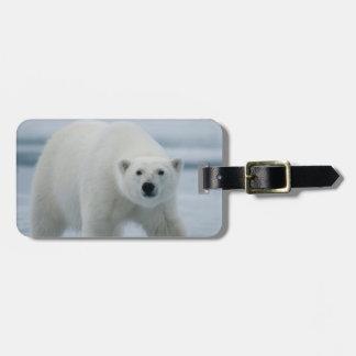 Polar Bear, Ursus Maritimus, Adult Luggage Tag