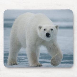 Polar Bear, Ursus Maritimus, Adult Mouse Mat