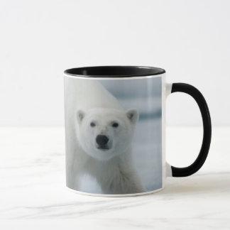Polar Bear, Ursus Maritimus, Adult Mug