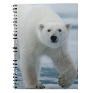 Polar Bear, Ursus Maritimus, Adult Notebook