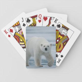 Polar Bear, Ursus Maritimus, Adult Playing Cards