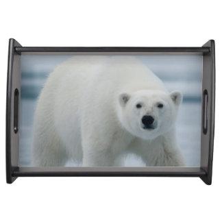 Polar Bear, Ursus Maritimus, Adult Serving Tray