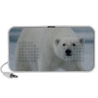 Polar Bear, Ursus Maritimus, Adult Mp3 Speakers