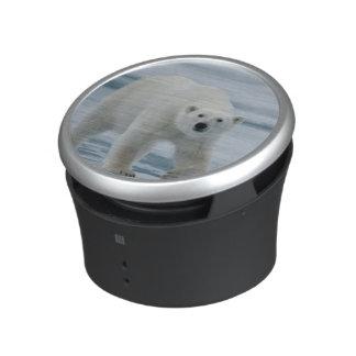 Polar Bear, Ursus Maritimus, Adult Speaker