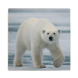 Polar Bear, Ursus Maritimus, Adult Wood Coaster