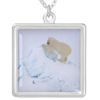 polar bear, Ursus maritimus, climbing up rough Silver Plated Necklace