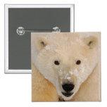 polar bear, Ursus maritimus, close up of a cub 15 Cm Square Badge