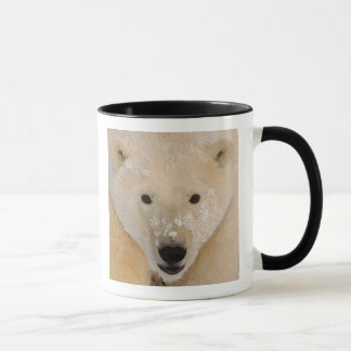 polar bear, Ursus maritimus, close up of a cub Mug