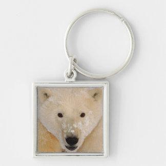 polar bear, Ursus maritimus, close up of a cub Silver-Colored Square Key Ring