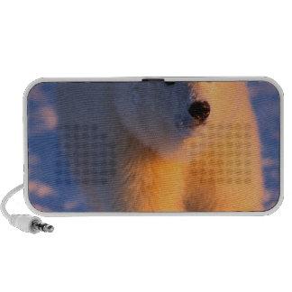 polar bear, Ursus maritimus, cub on the pack Travel Speaker
