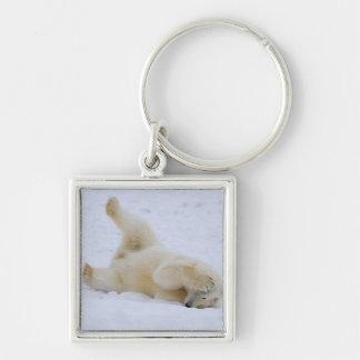 polar bear, Ursus maritimus, cub rolling 2 Key Ring