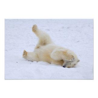 polar bear Ursus maritimus cub rolling 2 Photographic Print