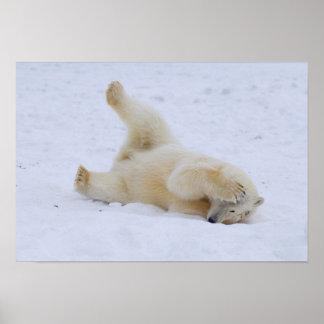 polar bear, Ursus maritimus, cub rolling 2 Poster
