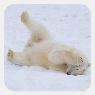 polar bear, Ursus maritimus, cub rolling 2 Square Sticker