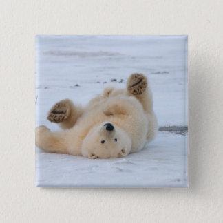 polar bear, Ursus maritimus, cub rolling 3 15 Cm Square Badge