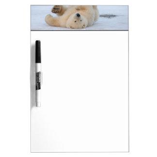 polar bear, Ursus maritimus, cub rolling 3 Dry Erase Board