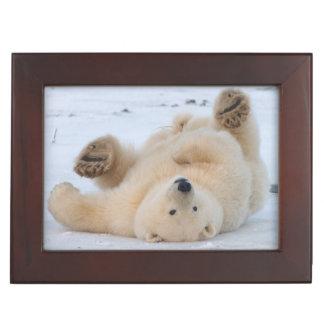 polar bear, Ursus maritimus, cub rolling 3 Keepsake Box